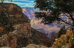 Zuidenrand van Grand Canyon -mening die onderaan ontworpen door overhangende boom kijken royalty-vrije stock afbeelding