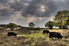 Zuiderheide Image libre de droits