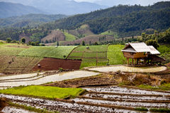 Zuidoostaziatische padieveldterrassen in Thailand Royalty-vrije Stock Foto