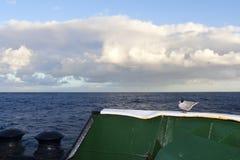 Zuidpoolstern, golondrina de mar antártica (tristanensis), vittata de los esternones tri imágenes de archivo libres de regalías