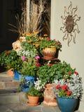 Zuidwesten bloemen Stock Foto's