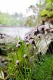 Zuinigheidsbloemen stock afbeelding