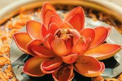 Zuivere die Nelumbo-bloem als Lotus in een kopervaas wordt bekend Heilige installatie in Hindoeïsme en Boeddhisme stock afbeelding