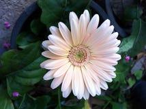 Zuivere flora royalty-vrije stock fotografie