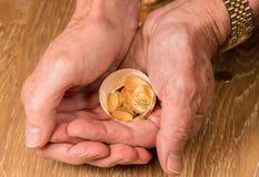 Zuivere gouden muntstukken in eishell die nestei illustreren Royalty-vrije Stock Afbeeldingen