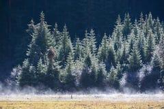 Zuivere witte miststroom onder de pijnbomen, Jiuzhaigou, Sichuan, China Royalty-vrije Stock Fotografie