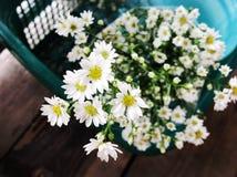 Zuiverheidsbloemen Stock Afbeeldingen