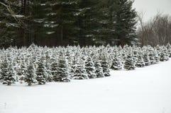 Zukünftige Weihnachtsbäume Stockbild