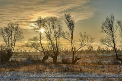 Zulawy Poland, frosty winter morning among fields Royalty Free Stock Photos