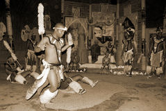 Zulu dancers Stock Images