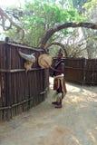 O homem do tribo Zulu em tradicional fecha turistas do cumprimento em tradicional fecha-se na vila do tribo Zulu de Shakaland, Áfr Imagens de Stock
