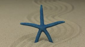 Zumbido de uma estrela do mar bonita que encontra-se em um ziguezague feito da areia filme