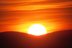 Zumbido em um por do sol alaranjado lindo Fotografia de Stock