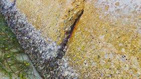 Zumbido embalado dos shell dos moluscos Fotos de Stock Royalty Free