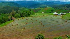 Zumbido largo da paisagem da inclinação do campo do arroz do lapso de tempo de Hd para fora filme
