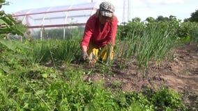 Zumi dal pezzo di terra coltivato alla cipolla dell'erbaccia della donna con la zappa in orto Fotografia Stock Libera da Diritti