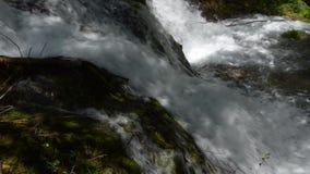 Zummi il fiume stock footage