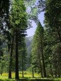 Zumwalt Meadows Stock Images