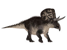 Zuniceratops Royalty Free Stock Images