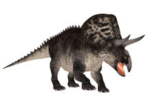 Zuniceratops Stock Photography