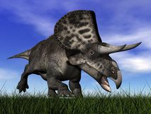 Zuniceratops dinosaur - 3D render Royalty Free Stock Images