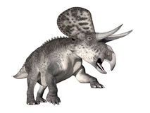Zuniceratops dinosaur - 3D render Royalty Free Stock Photo