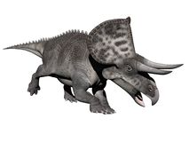 Zuniceratops dinosaur - 3d render Stock Photos
