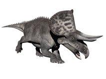 Zuniceratops-Dinosaurier - 3D übertragen Stockfotos