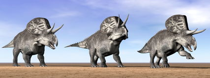 Zuniceratops dinosaurs in the desert - 3D render Stock Images