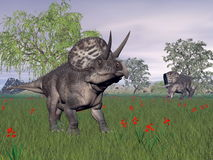 Zuniceratops dinosaurs in nature - 3D render Royalty Free Stock Image