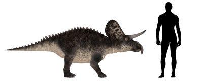 Zuniceratops Size Comparison stock illustration