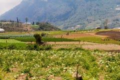 ZUNIL, ΓΟΥΑΤΕΜΆΛΑ - 22 ΜΑΡΤΊΟΥ 2016: Οι τοπικοί άνθρωποι εργάζονται σε έναν φυτικό τομέα κοντά στο χωριό Zunil, Guatema στοκ φωτογραφία