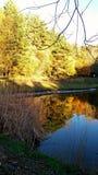 Zupełnie pogodny i jeziorny las zdjęcie stock