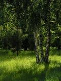 zupełnie zielony Zdjęcie Stock