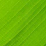 Zurück vom Bananenblatt-Beschaffenheitshintergrund Lizenzfreies Stockbild