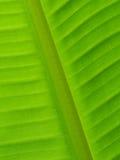 Zurück vom Bananenblatt-Beschaffenheitshintergrund Lizenzfreie Stockfotos