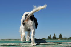 Zurück vom Hund Stockfoto