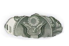Zurück von einem Dollarschein Stockfotografie