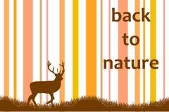 Zurück zu Natur Stockbilder
