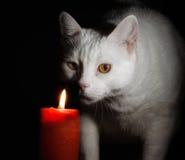 Zurückhaltende Katze - mit großem gelbem Dämon mustert - schwarzer Hintergrund Stockfoto