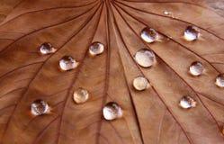 Zurückhaltendes Bild des trockenen Blattes mit Tautropfen auf hölzernem Hintergrund Selektiver Fokus Stockfotos