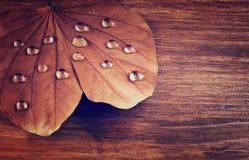 Zurückhaltendes Bild des trockenen Blattes mit Tautropfen auf hölzernem Hintergrund Selektiver Fokus Gefiltertes Bild Lizenzfreie Stockfotos