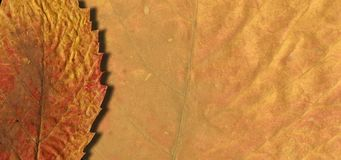 Zur?ck zu Schule Herbstlaub wird mit Kreide auf schwarzer Tafel gezeichnet Skizze, Gestaltungselemente stockfoto