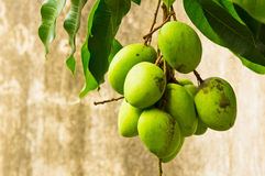 Zure mango Stock Afbeeldingen