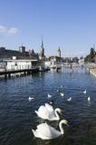 Zurich downtown and Limmat river with swans Royalty Free Stock Images