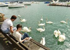 Zurich Schweiz - Juni 03, 2017: Folk på kajsjön Zurich Royaltyfria Foton