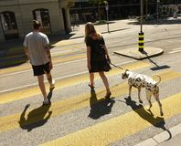 Zurich Szwajcaria, Czerwiec, - 03, 2017: Ludzie z psem na zebry cr Obrazy Royalty Free