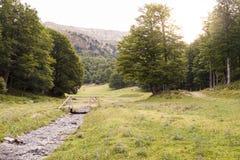 Κοιλάδα Zuriza Στοκ Εικόνα