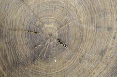 Zusammenfassung, Beschaffenheit im Holz einer Baumulme Lizenzfreie Stockfotos