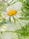 Zusammenfassung der Gänseblümchenblume Lizenzfreie Stockbilder